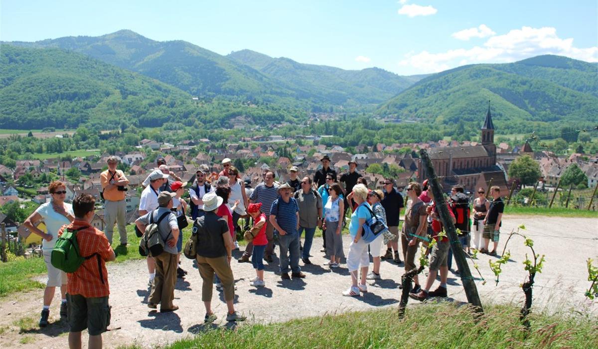 Vins d'Alsace Schoenheitz à Wihr au Val.