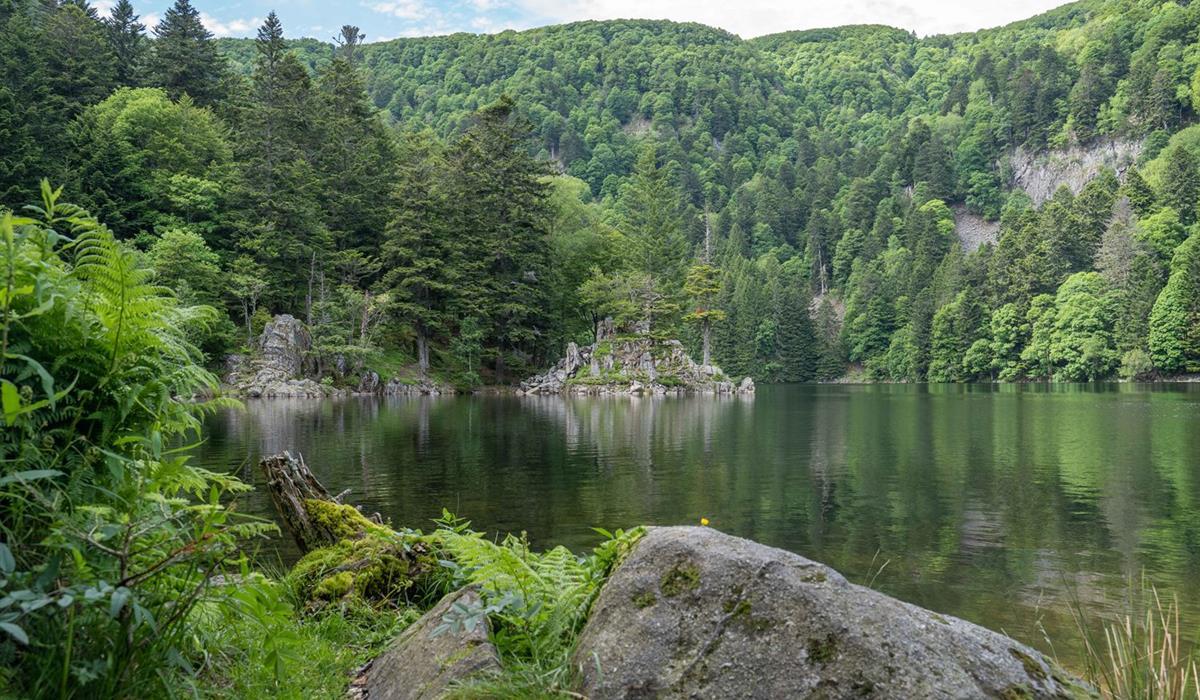 Le lac Altenweiher - Vallée de Munster - Alsace