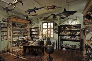 image - The Zoological Museum