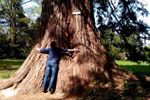 Le Sequoia