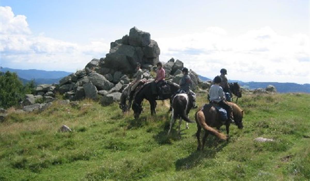 Photo association Nature et Cheval - Vallée de Munster