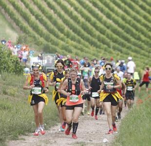 Marathon du vignoble d'Alsace - image