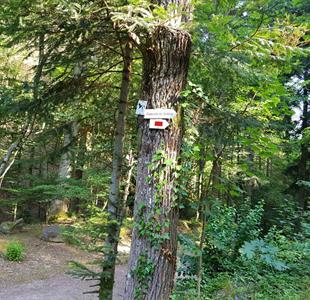 Hiking from Nideck to Gensbourg - image