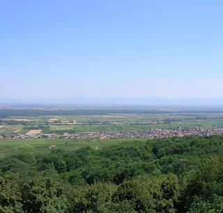 pfaffenheim_vue schauenberg (1)