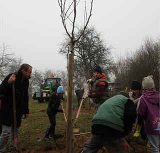 Plantation participative de fruitiers