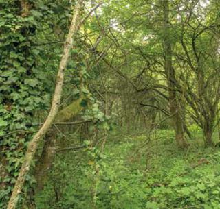 forêt du Hasselbach