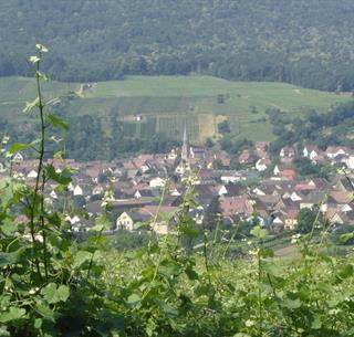 Sentier viticole d'Orschwihr - crédit L. Gorkiewicz