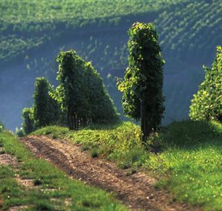 Sentier des Poètes, Soultzmatt, Canton de Rouffach, Haut-Rhin, Alsace