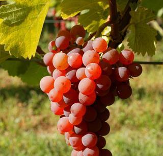 © ZVARDON  Conseil Vins Alsace